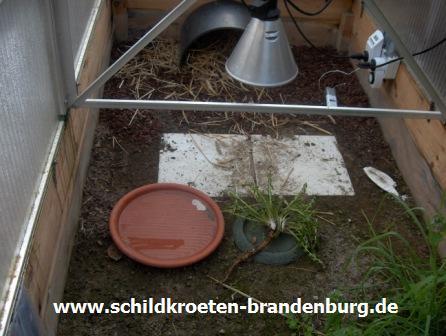 Einrichtung Schildkroeten Brandenburg Haltung Beratung Hilfe