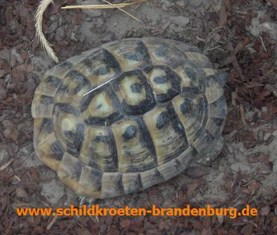 Hibernation Schildkroeten Brandenburg Haltung Beratung Hilfe