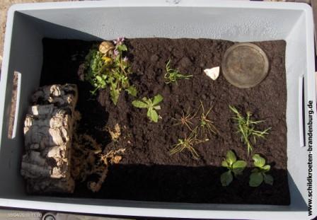 Kleiner Kühlschrank Für Schildkröten : Aufzucht jungtiere schildkroeten brandenburg haltung beratung