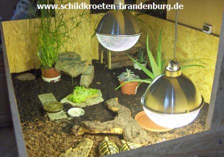 gr sse standort schildkroeten brandenburg haltung beratung hilfe auch andere reptilien. Black Bedroom Furniture Sets. Home Design Ideas