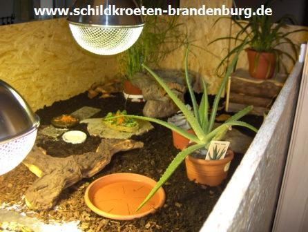 einrichtung schildkroeten brandenburg haltung. Black Bedroom Furniture Sets. Home Design Ideas
